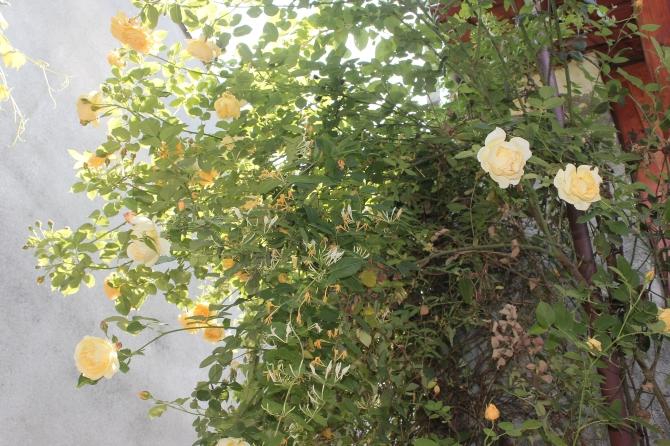 Mum's garden 5