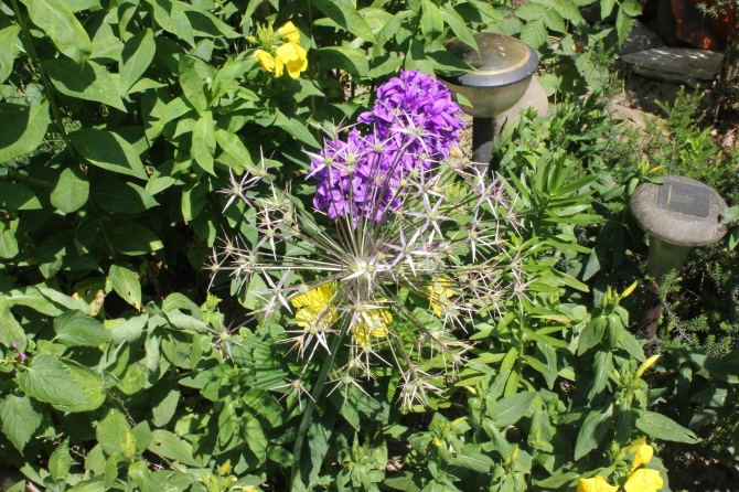 Mum's garden 2