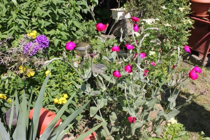 Mum's garden 3
