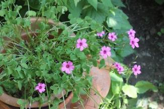 Mum's garden 4