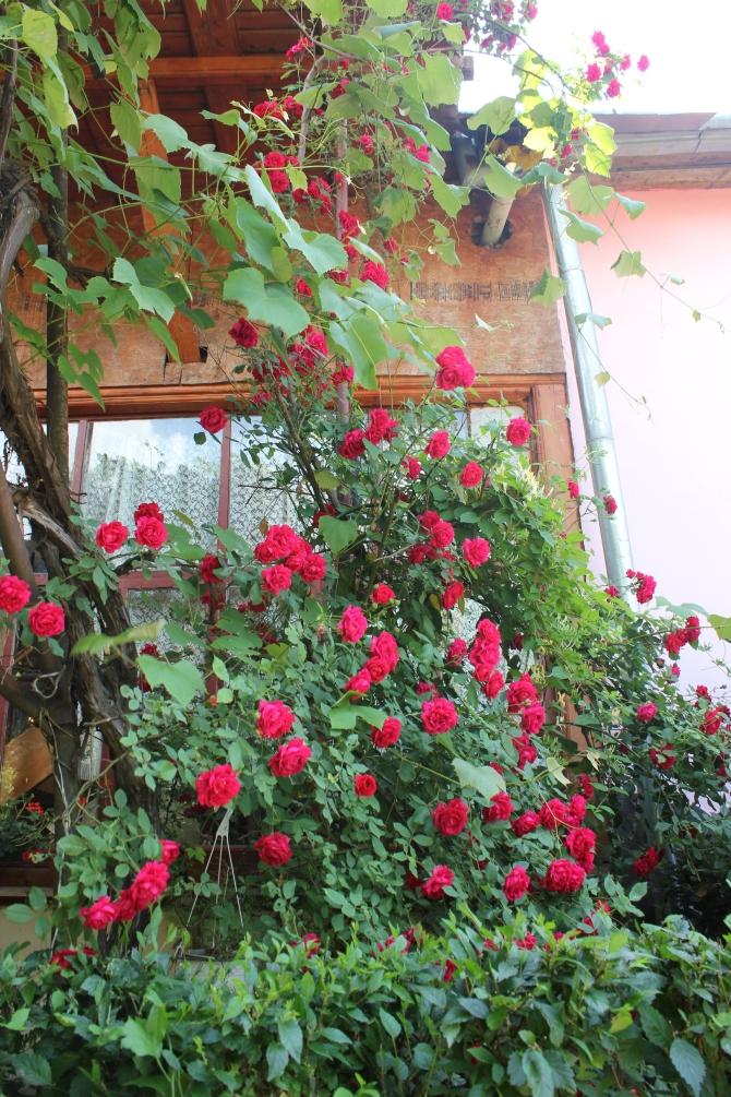 Mum's garden 7