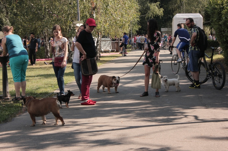 GreenSounds Music Festival in Herastrau Park